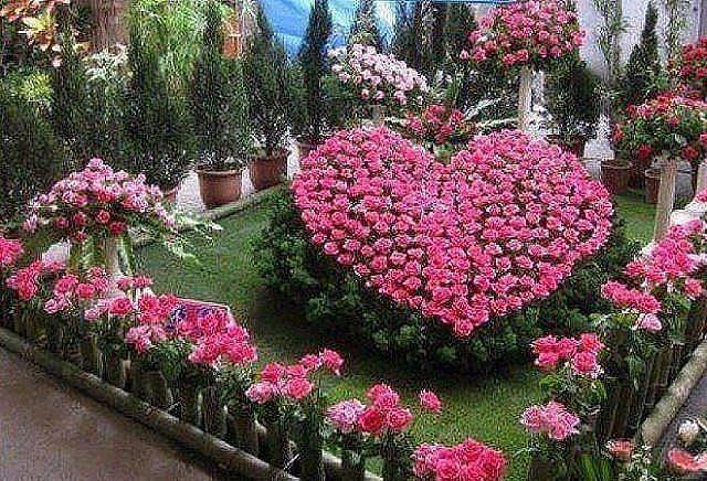 Красивые клумбы с цветами фото