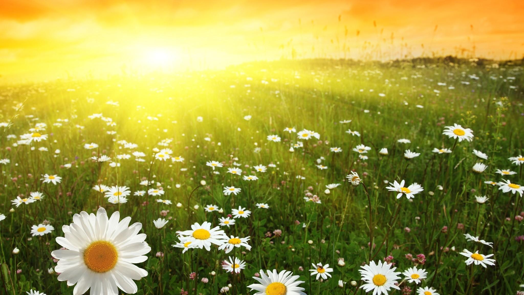 солнце светит для тебя картинки