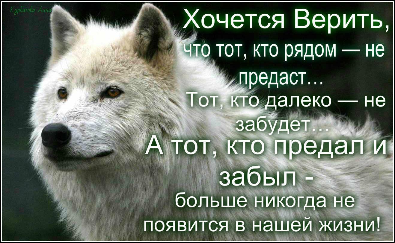 картинки волков с цитатами о жизни